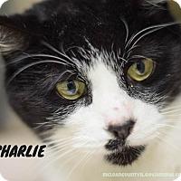 Adopt A Pet :: Charlie - Hanna City, IL