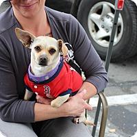 Adopt A Pet :: Babs - Yuba City, CA