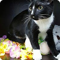 Adopt A Pet :: Colt - Albemarle, NC
