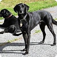 Adopt A Pet :: Jake and Ben - Kilmarnock, VA