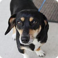 Adopt A Pet :: Dutchess - Allentown, PA