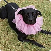 Adopt A Pet :: Haley - Hutchinson, KS