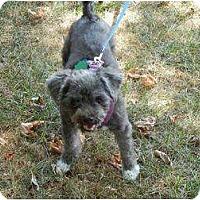 Adopt A Pet :: Ubu - Madison, WI