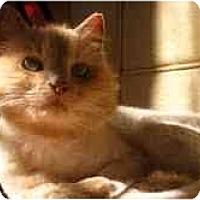 Adopt A Pet :: Diva - Arlington, VA