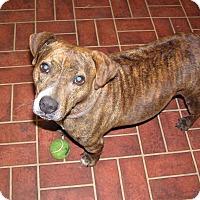 Adopt A Pet :: Kate - Ravenel, SC