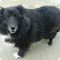 Adopt A Pet :: Kuro - San Diego, CA