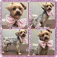 Adopt A Pet :: Bruno - South Gate, CA
