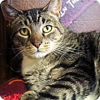 Adopt A Pet :: Frank - Bellevue, WA
