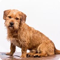 Adopt A Pet :: Yarmouth - MEET ME - Norwalk, CT