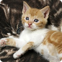 Adopt A Pet :: Kenny Chesney of