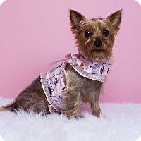 Adopt A Pet :: Abby - Baton Rouge, LA