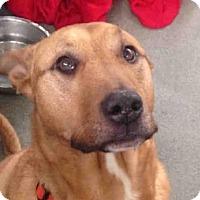 Adopt A Pet :: ZIGGY - Pittsburgh, PA