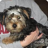 Adopt A Pet :: Chunky Monkey - Rochester, NY