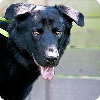Adopt A Pet :: Rocko - Houston, TX
