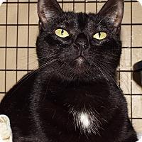 Adopt A Pet :: Yve - Grants Pass, OR