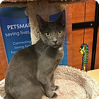 Adopt A Pet :: Tristan - Islip, NY