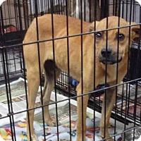 Adopt A Pet :: Lucky - Jamestown, TN