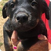Adopt A Pet :: Queen - Quinlan, TX