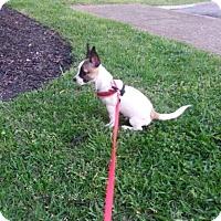 Adopt A Pet :: LEVI - Toronto, ON