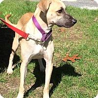 Adopt A Pet :: Marvelous Mork - Madison, NJ