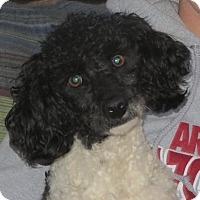 Adopt A Pet :: Wally - Greenville, RI