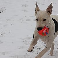 Adopt A Pet :: Dixie - Georgetown, TX