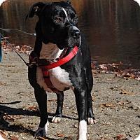 Adopt A Pet :: Frankie - Shrewsbury, NJ