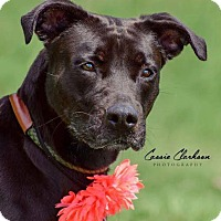 Adopt A Pet :: Cynder - ADOPTED! - Zanesville, OH