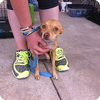 Adopt A Pet :: Scout - Blanchard, OK
