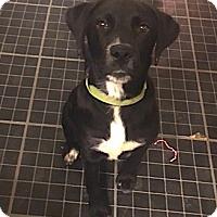 Adopt A Pet :: Rex RH CP - Providence, RI