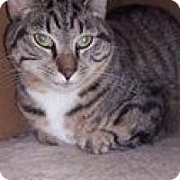 Adopt A Pet :: Glenn - Florence, KY