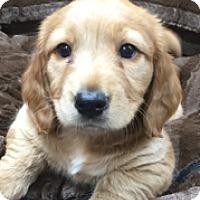 Adopt A Pet :: Fabio - McKinney, TX