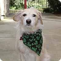 Adopt A Pet :: Milo - Chino Hills - Chino Hills, CA