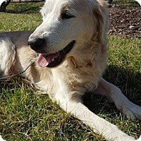 Adopt A Pet :: Lucky Larry - Washington, DC