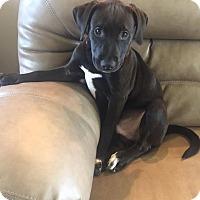 Mixed Breed (Medium) Mix Puppy for adoption in Goldsboro, North Carolina - Fuzzbert