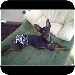 Miniature Pinscher Mix Dog for adoption in North Hollywood, California - Maggie