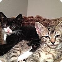 Adopt A Pet :: Twitter and Tweet - East Hanover, NJ