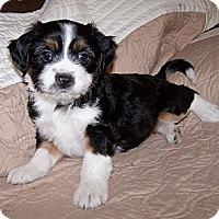 Adopt A Pet :: Kelcee - La Habra Heights, CA