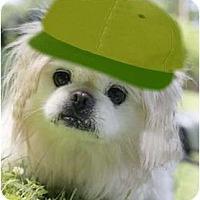 Adopt A Pet :: Kinney-PA - Emmaus, PA