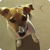 Adopt A Pet :: RICCOCHET - Scottsdale, AZ