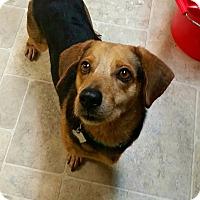 Adopt A Pet :: Rico - Freeport, ME