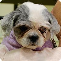 Adopt A Pet :: ELIZABETH - Albany, NY