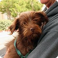 Adopt A Pet :: Gayle - Palmdale, CA