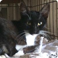 Adopt A Pet :: Shane - Cocoa, FL