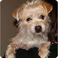 Adopt A Pet :: Tiny - Mocksville, NC