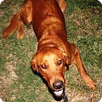 Adopt A Pet :: Max - Santa Ana, CA