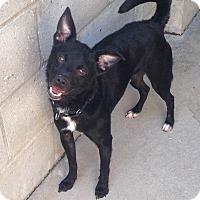 Adopt A Pet :: JET - Pompton Lakes, NJ
