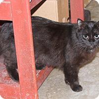 Adopt A Pet :: Inky - Sylvania, GA