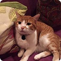 Adopt A Pet :: Crimson - Laguna Woods, CA