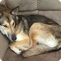 Adopt A Pet :: Winnie - Saskatoon, SK